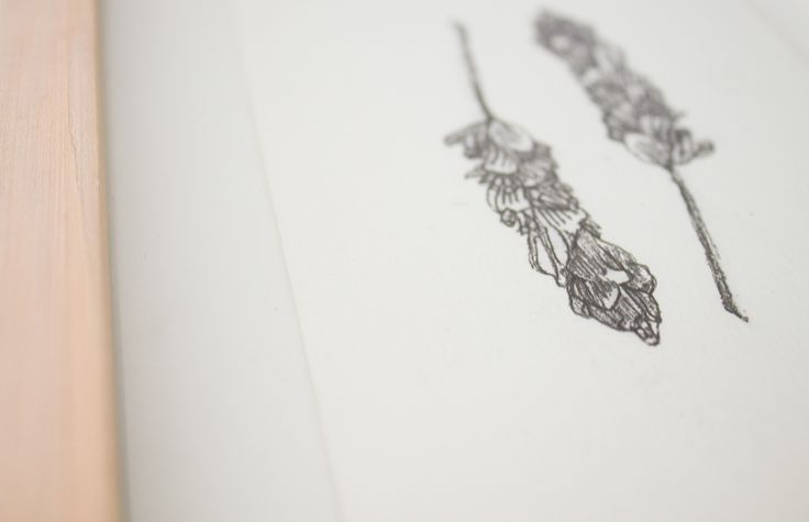 Two lavender buds.   Pen drawing and printmaking on Fabriano paper.   BY Pencilheart Art on Behance.