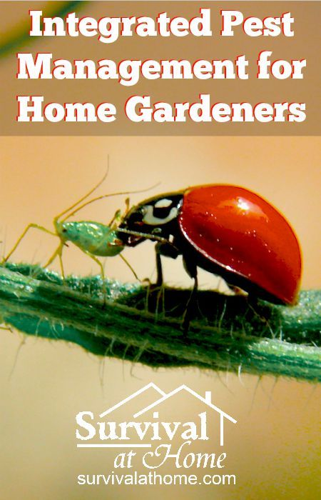 Integrated Pest Management for Home Gardeners » When you find that something has been eating your homegrown veggies, how do you stop it? Integrated pest management for home gardeners is the best solution.  » #GardenTips, #HomeGardeners, #IntegratedPestManagement