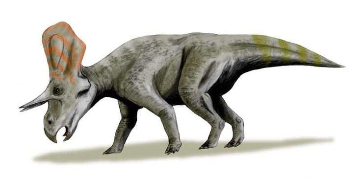 Dinosaurio Zuniceratops