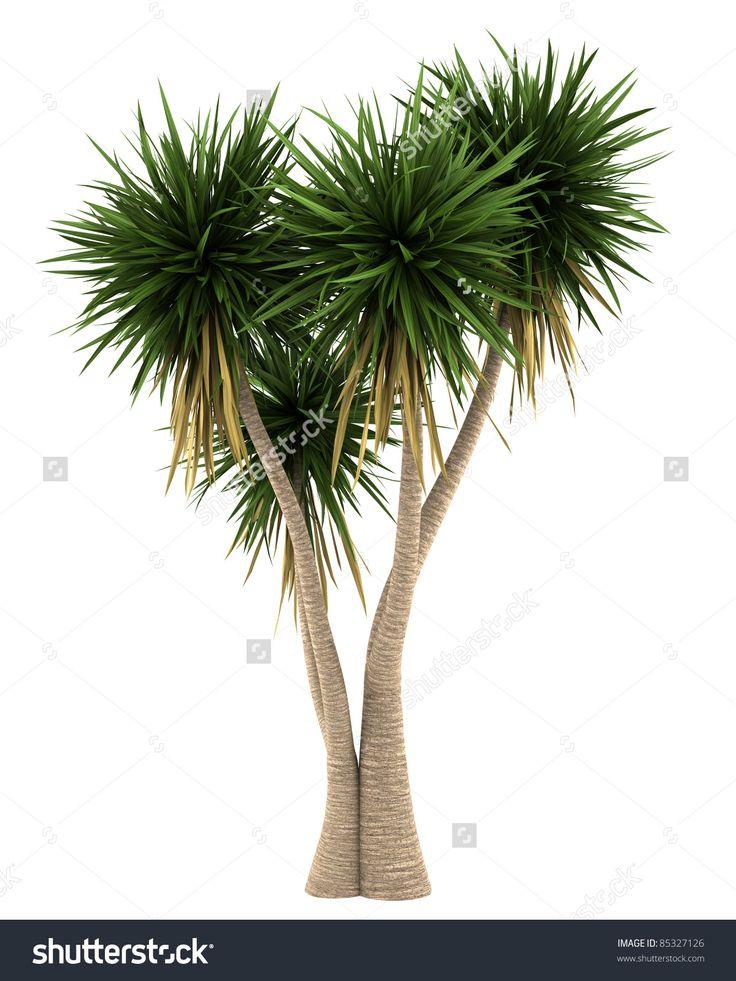 die besten 25 yucca palme ideen auf pinterest yucca pflanze zimmerpflanze palme und yucca. Black Bedroom Furniture Sets. Home Design Ideas