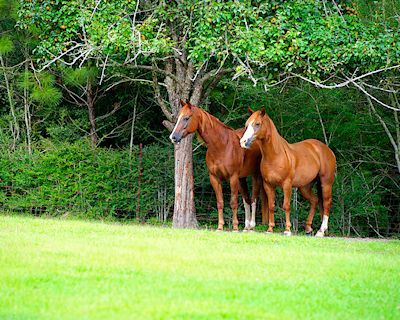 Caballos pura sangre en las verdes praderas | BANCO DE IMAGENES (shared via SlingPic)