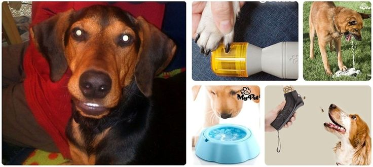 ❤ Time To Spoil Our Dog - Aramis Picks His TOP 8 Accessories!