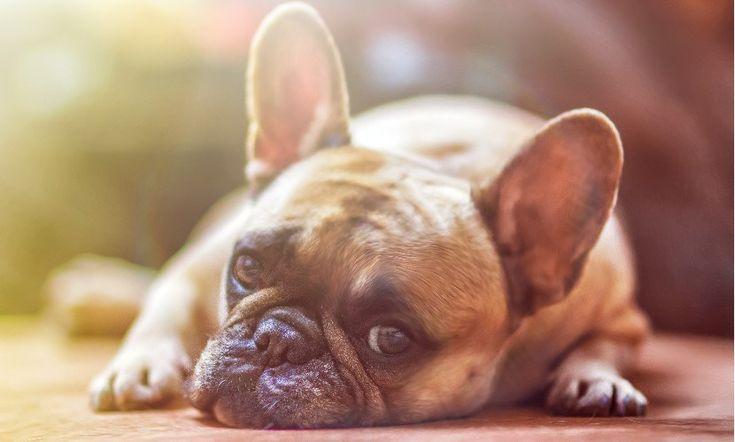 Dog anxiety remedies