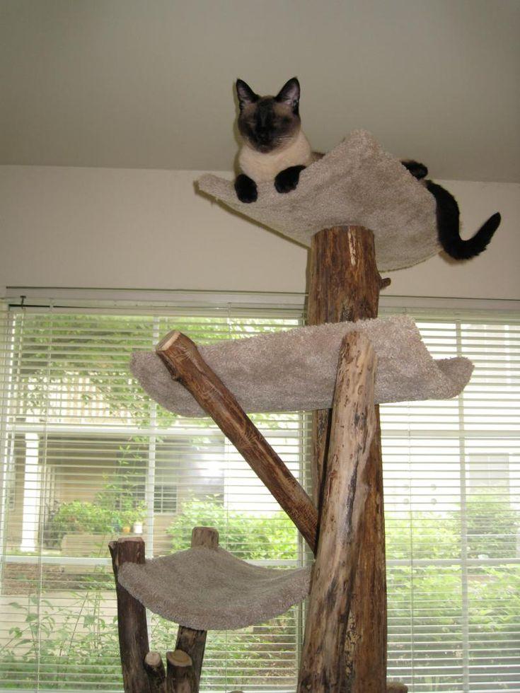 Cat Tree Kingdom - Testimonials