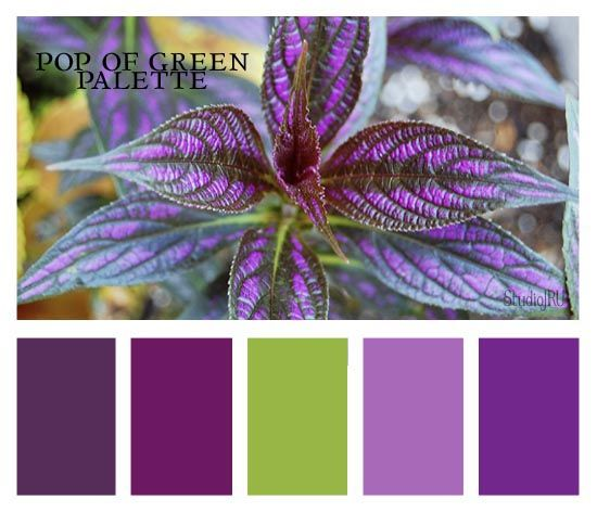 "Bedroom Colors Green And Purple 94 best ""purple & green"" together images on pinterest 