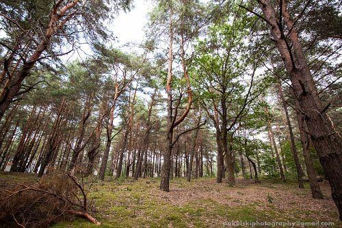 Panoramio - Photos by Rafał Pakulski (Fotograf ślubny Pruszków)