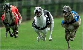 Test your luck and take a chance at the dog race on your hen night! For some hens, their last night of freedom will not be complete without some light gambling. If you can relate to that, head to the nearest stadium and enjoy a night of dog racing!  http://www.henit.ie/day-activity/dog-racing/
