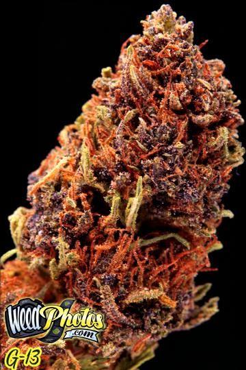 G13 marijuana strain pictures