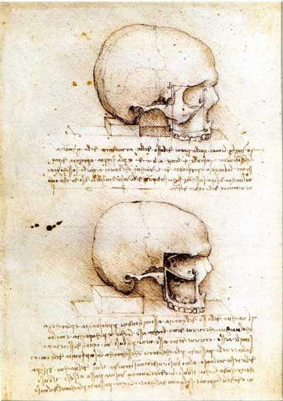 da Vinci, anatomical drawings of skull and eye cavity