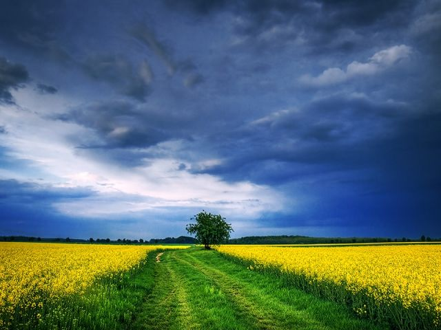 Магия природы в фотографиях Жольта Жигмонда (Zsolt Zsigmond)