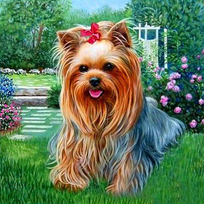 Йорк с бантиком   Картины, Собачье искусство, Картины собак