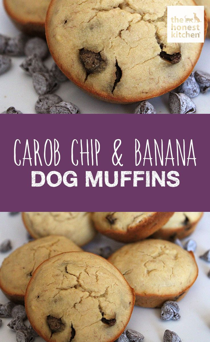 Carob is a sweet and safe treat for dogs, and a great substitute for chocolate! Try out these delicious carob chip and banana gluten free dog muffins and your pup will be begging for more! #THK #HonestKitchen #dog #food #recipe #pet #DIY #muffins