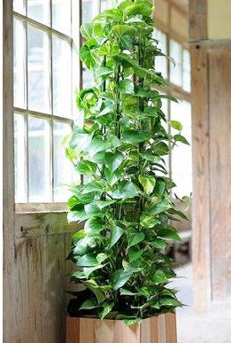Plant Gifts for Home or Office - Indoor Plants - GivingPlants.com