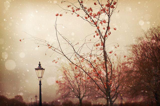 Autumn dreamer.