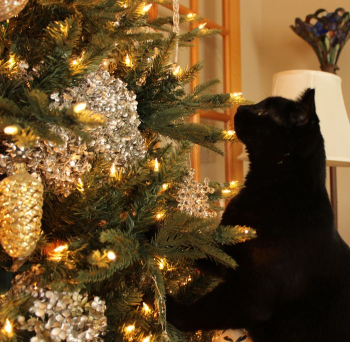 Christmas Tree Made Of Black Cats