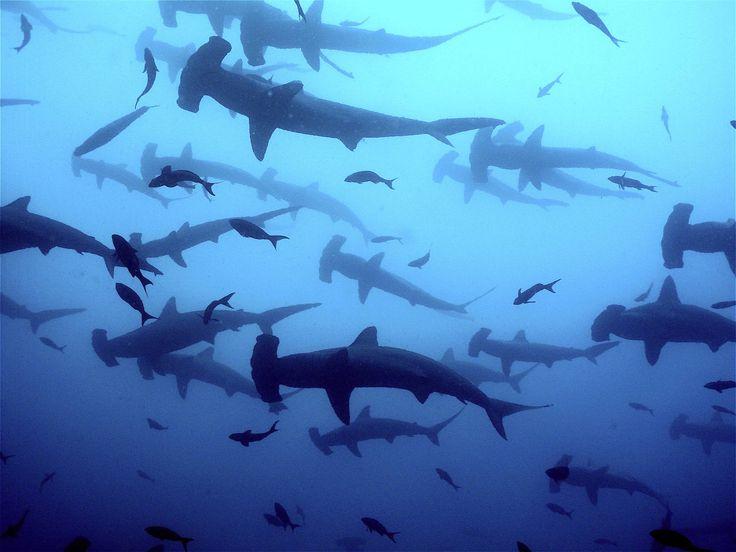 Galapagos!!! Tauchhighlight 2015!!! - Atlantis Berlin Wassersport & Mee(h)r