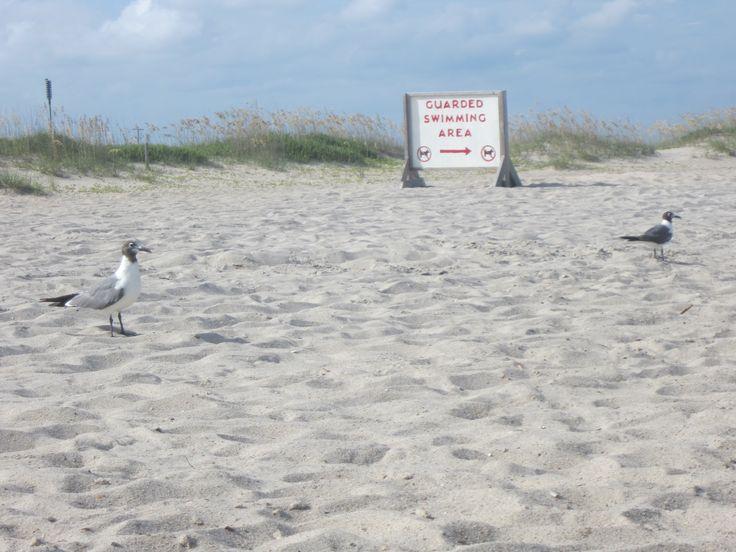 414 Best Images About Kure And Carolina Beach Totally Amazing On Pinterest Beach Sunrise