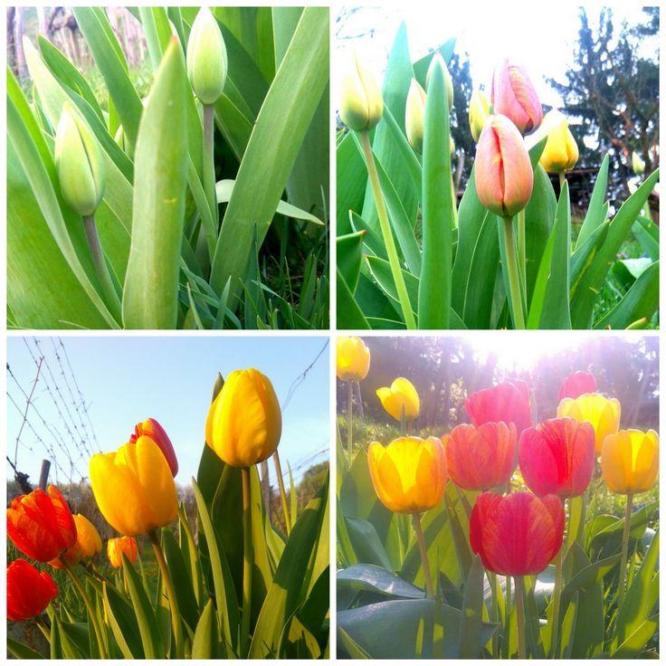 Jar dala tento rok na seba počkať. Marec bol rovnako zamračený adaždivý ako október. Dokonca apríla si to predsa len