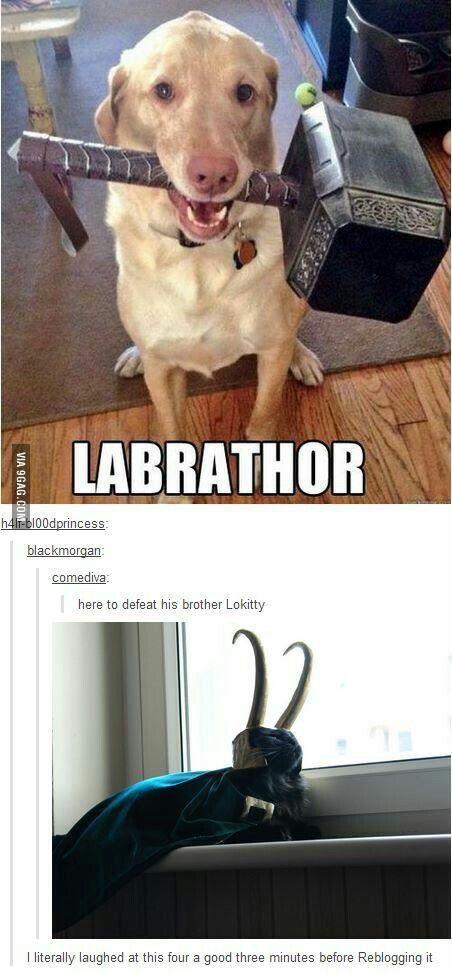 Labrathor & Lokitty XD HAHAHA!!!!! I'M DYING!!! #Thor #Loki #Avengers