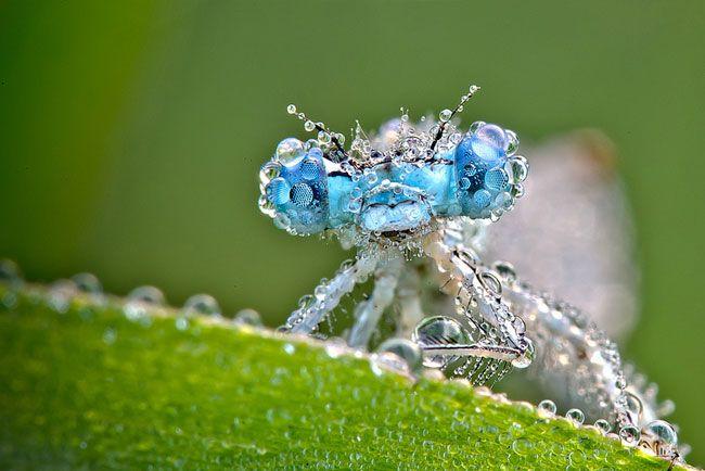 11-Macro-Photo-David-Chambon-Insects