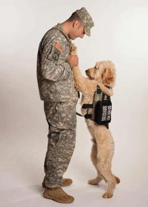 """It says """"Do Not Pet Service Dog"""" ... It doesn't say don't love service dog.. :-)"""