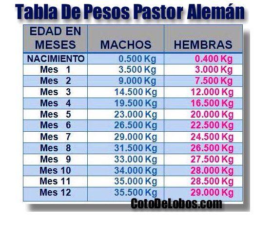 Peso correcto del Pastor Alemán