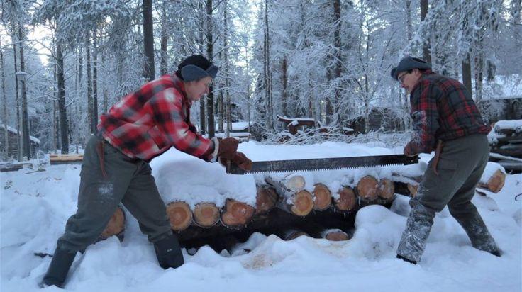 Lumberjack experience - Rovaniemi, Lapland, Finland