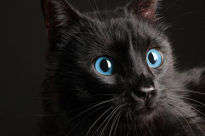 Výsledek obrázku pro kočka