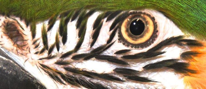 Get eye to eye with a Parrot - Papegaai in Avonturia