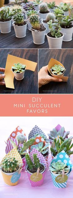 Make these Mini Succulent party favors, just wrap them with scrapbook paper, add a lable and done! Simple and easy! -MamiTalks.com