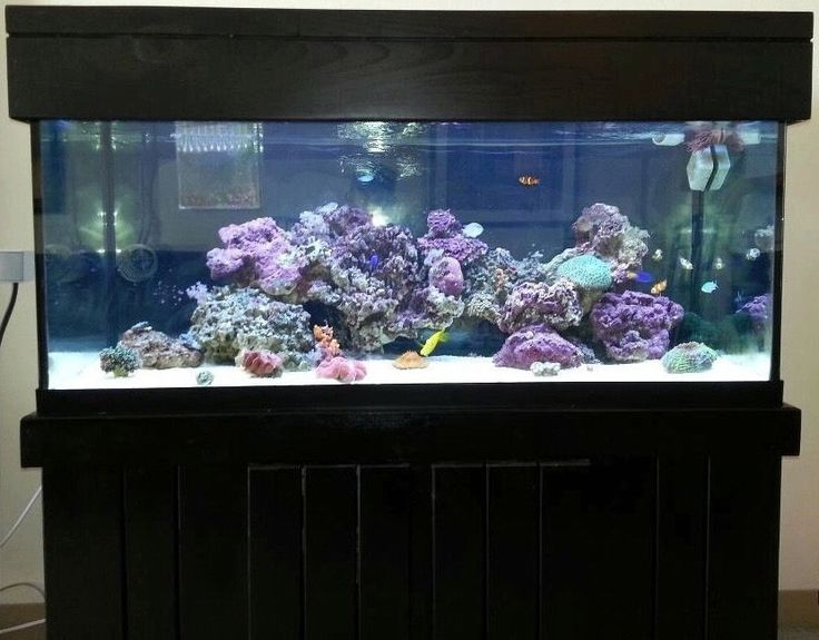 Best 25 90 gallon fish tank ideas only on pinterest for 90 gallon fish tank stand