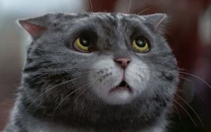 В сети появилась очаровательная рождественская реклама с котом в главной роли, который призван вернуть нас всех в детство . https://youtu.be/kuRn2S7iPNU
