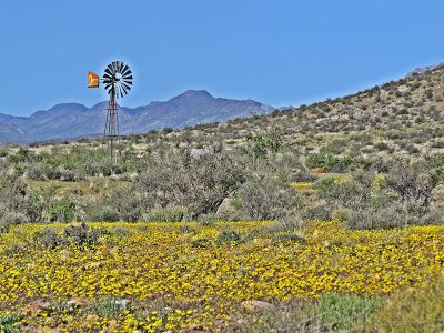 Karoo Hues: WHEN SPRING SPRANG, THE FLOWERS SPRUNG  Okay, we'r...