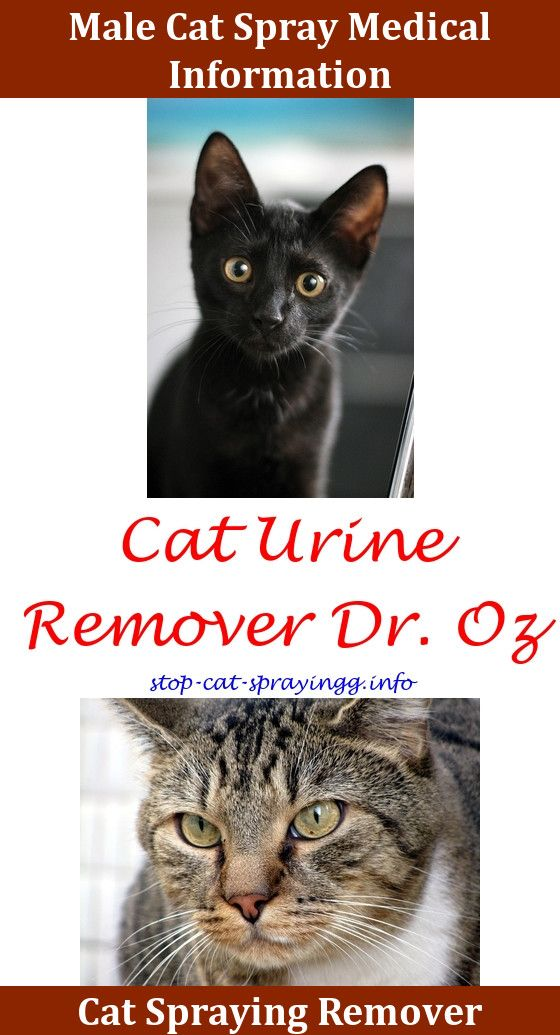 High Quality Cat Urine Removal Products,cat Spraying Odor Removal Cat Spray Remover  Water Cat Pee Smell Out Of Couch How To Remove Cat Urine Smell From Clothes  U2026