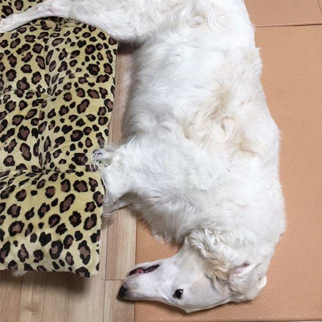 高度マイクロバブルバス🐕 madrina でいつも待ってます💛 ペットシッター&セルフシャンプー http://madrina.jp  大阪市鶴見区緑2-4-37 #ドッグ#dogbath#ドッグラン#動物病院#コインランドリー#犬と泊まれる宿#犬と泊まれるホテル#愛犬#温泉#マイクロバブル#ジャグジー#大阪#犬と暮らす家#犬と暮らす#スーパー銭湯#ホームセンター#小型犬#大型犬