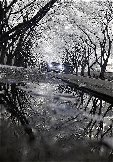 This is taken from a very interesting angle from the ground, yet it still captures the whole scene very well. The reflection of the image in the puddle is neat and makes a cool effect. The trees stretching over the top and reflected in the water makes it look circular, with the car in the center (also using the rule of thirds).
