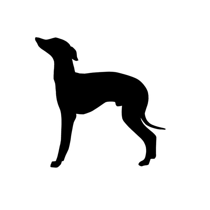 Silhouette of Iggy in colors or printed on a book page (Fab.com | Italian Greyhound Tattoos)