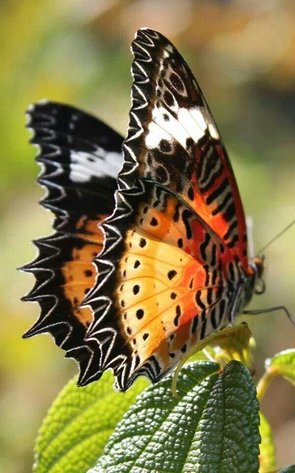 """#butterfly / """"O destino não é uma questão de sorte, é uma questão de escolha…"""