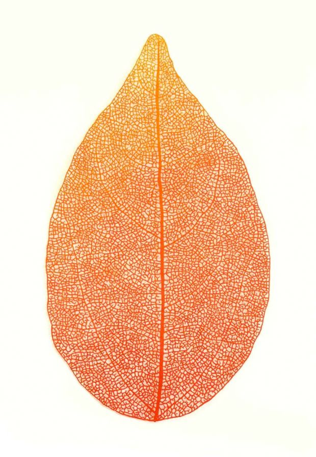 Meredith Woolnough borda la naturaleza