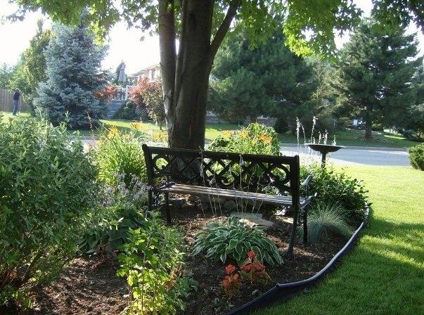 front garden under the maple tree