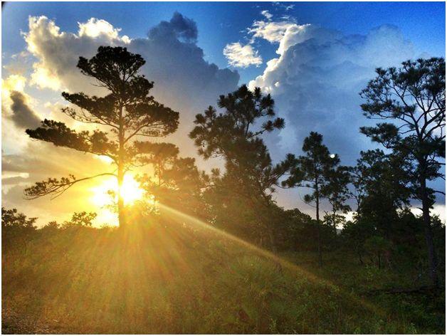 Mountain Pine Ridge Forest Reserve | Belize Tour of Mountain Pine Ridge