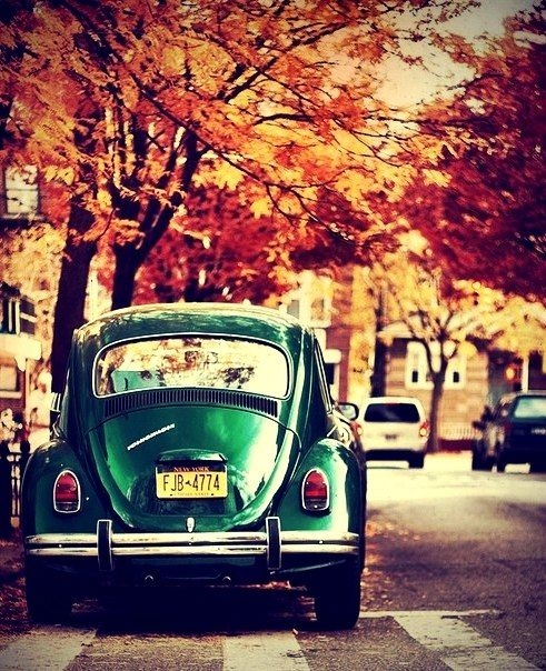 Fall leaves and a gorgeous shiny bug