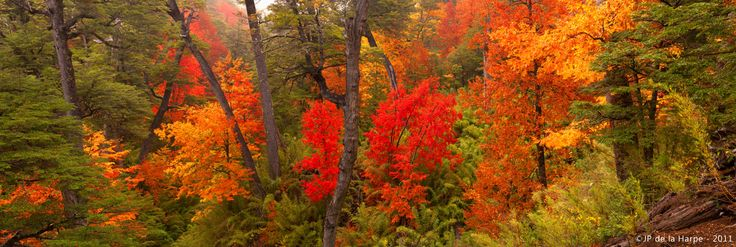 Visitar la Araucanía en otoño