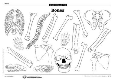 17 best images about scholastic 100 science lessons on for Skeleton template to cut out