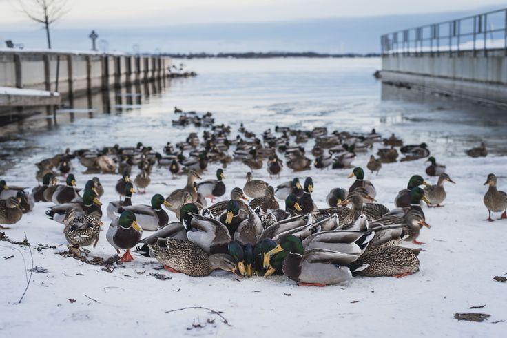 Top 10 Bucket List Winter Activities in Kingston Ontario