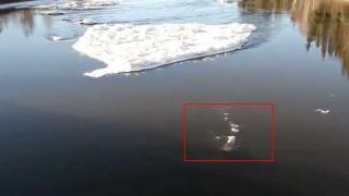 'Giant Arctic Crocodile' Baffles AK Officials