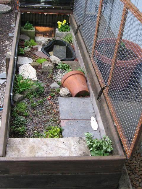 61 mejores im genes de tortugueros en pinterest for Peceras de jardin
