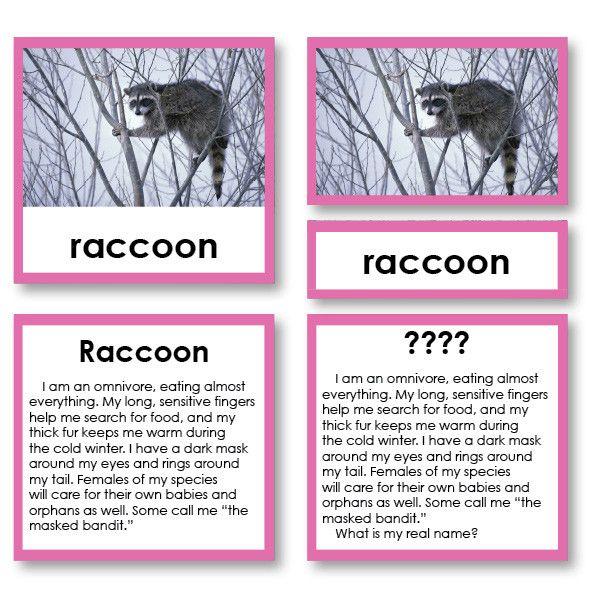 Riddle Stories Mammals Set 3