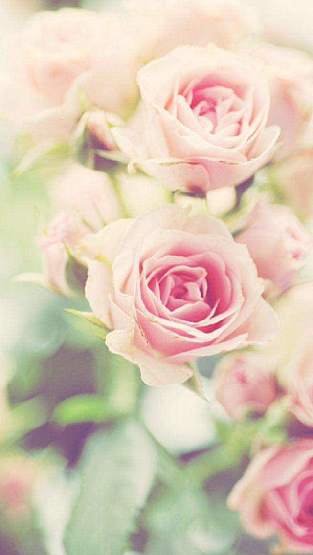 Spring flower iphone wallpaper