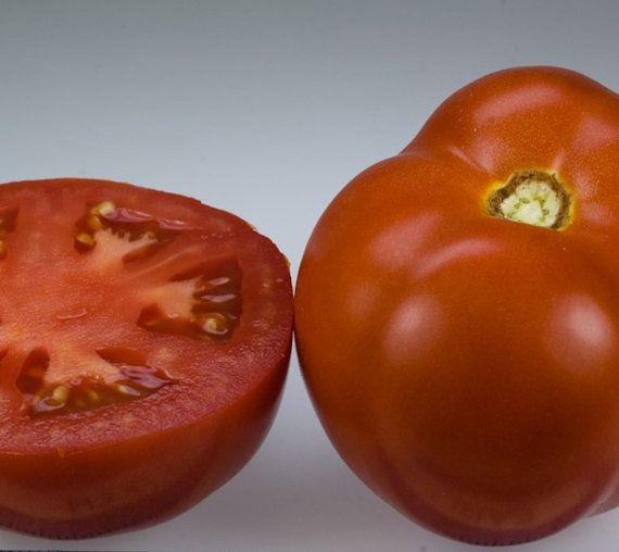 Organic Early Goliath Tomato Seeds - 20 Seeds  Lycopersicon lycopersicum    Tomato Type: Garden  Breed: Hybrid  Origin: USA  Season: Early  Leaf Type: Normal  Plant Type: Semi-Determinate  Plant Height: 5 ft.  Fruit Size: 8 oz.  Fruit Shape: Round  Skin Color: Red  Flesh Color: Red  Disease Resistance: Verticillium Wilt, Fusarium Wilt Race 1, Fusarium Wilt Race 2, Nematodes, Alternaria Stem Canker, Tobbacco Mosaic Virus  Days to Germination: 7 - 10 days depending upon methods, sunlight…